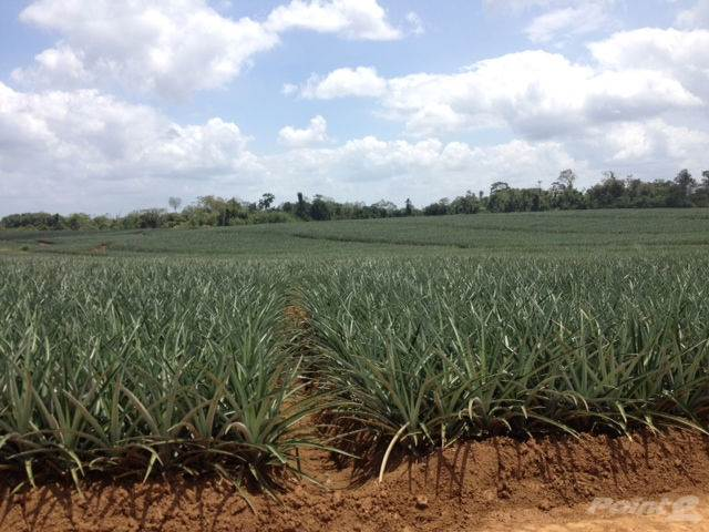 Farms & Ranches for sale in 475 hec, Modern Pineapple Plantation, San Carlos, Alajuela, Alajuela   , Costa Rica