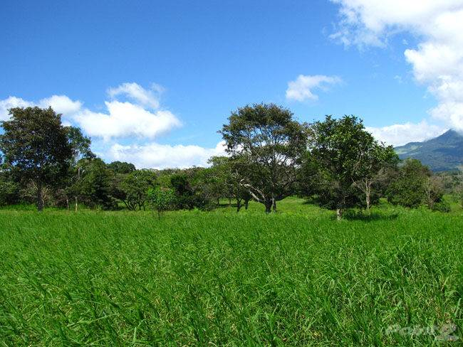 Land for sale in 4 Beautiful Hectares in Palmira, Boquete., Boquete, Chiriquí ,0000  , Panama