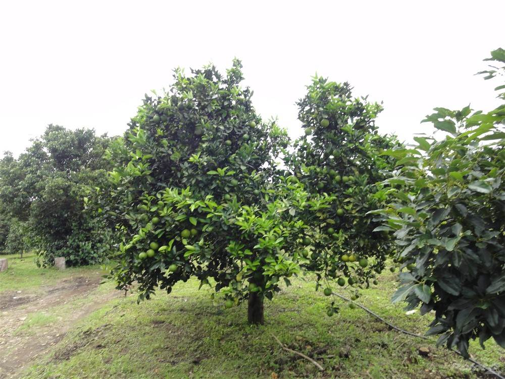 Residential For Sale in Beautiful 1.4 Hectares or 2.4 Hectares – In Palmira, Boquete, Palmira, Boquete, Panama, Boquete, Chiriquí   , Panama