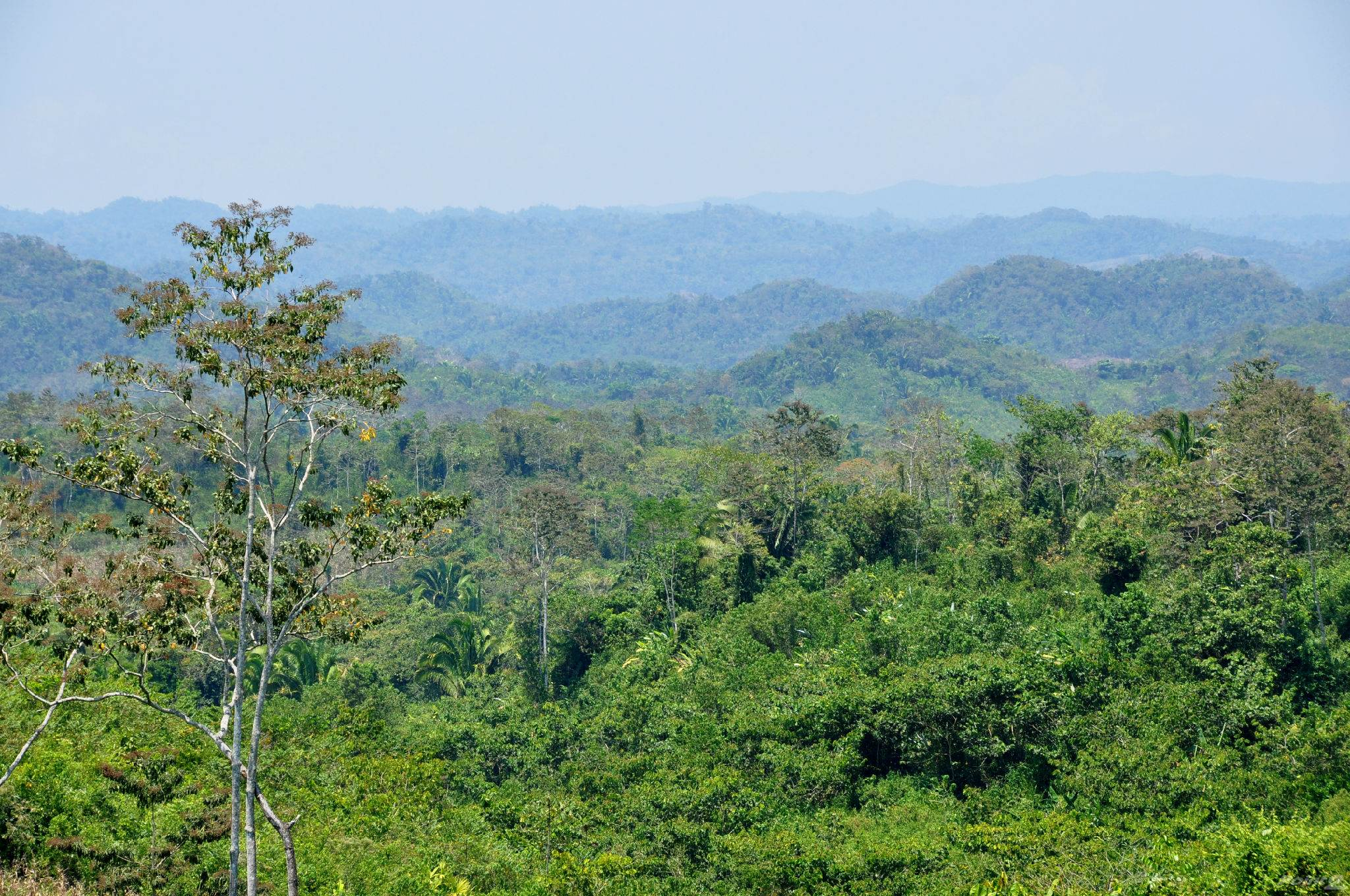 Farms & Ranches for sale in 10,000 Acres Toledo, Southern Highway, Toledo ,NA  , Belize
