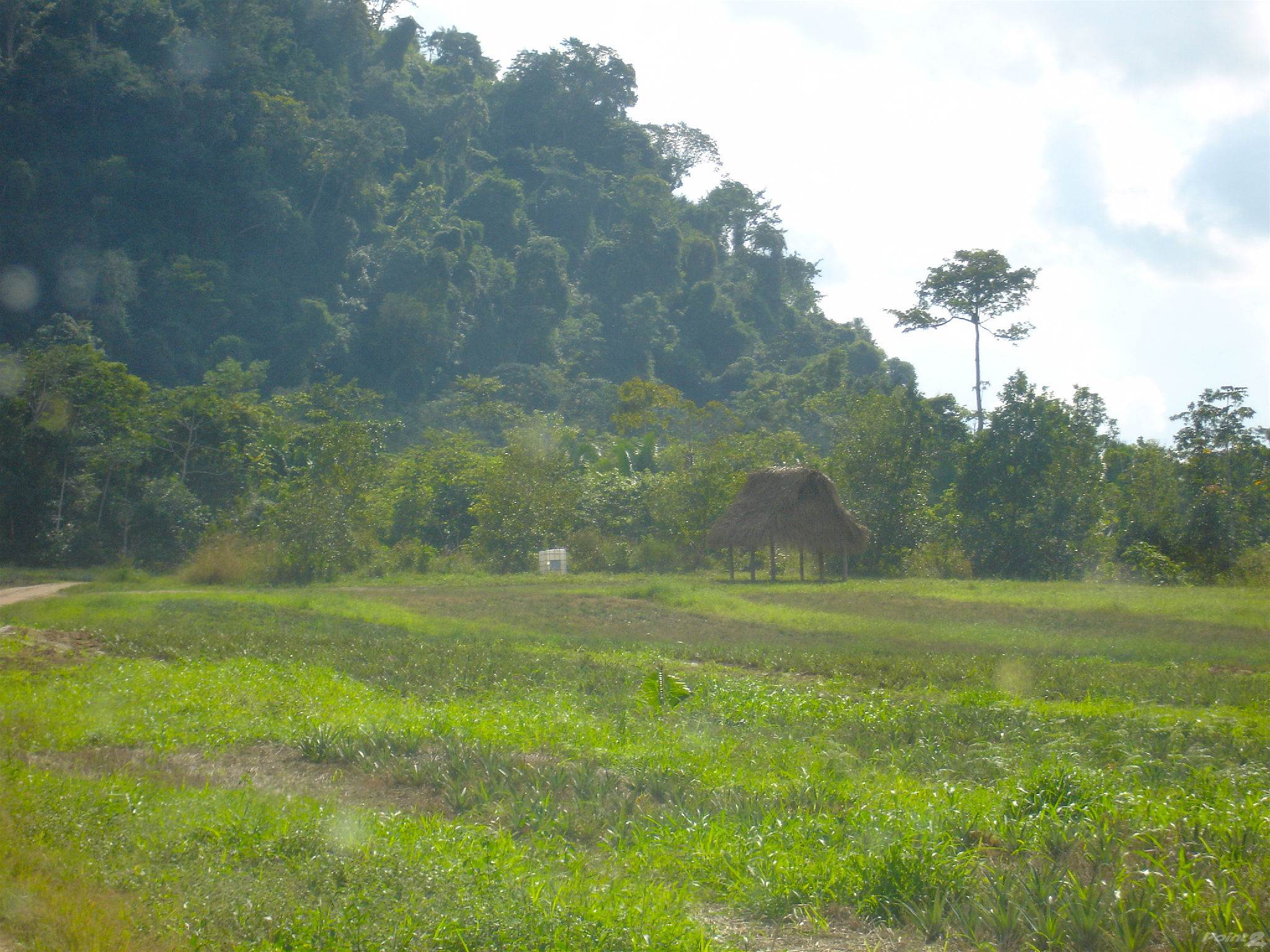 Farms & Ranches for sale in 10,000 Acres Toledo, Southern Highway, Toledo   , Belize