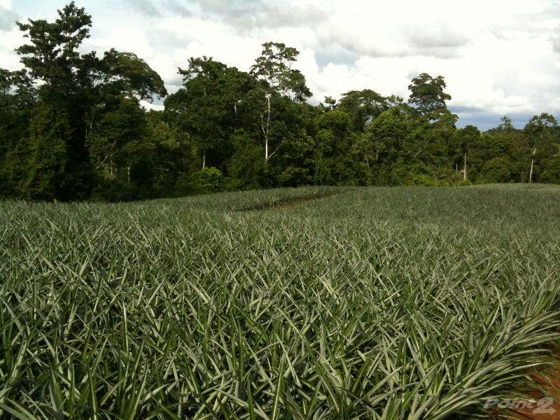 Farms & Ranches for sale in 500 hec, pineapple plantation. San Carlos, San Carlos, Alajuela   , Costa Rica