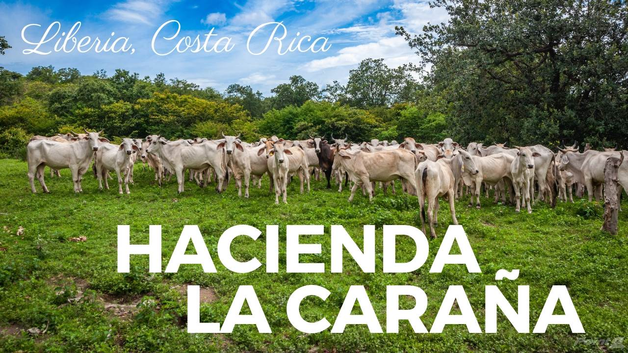 Farms & Ranches for sale in Hacienda la Caraña, Liberia, Guanacaste ,50503  , Costa Rica