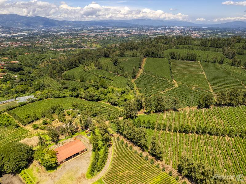 Farms & Ranches for sale in Coffee Mill Las Marias, , Heredia   , Costa Rica