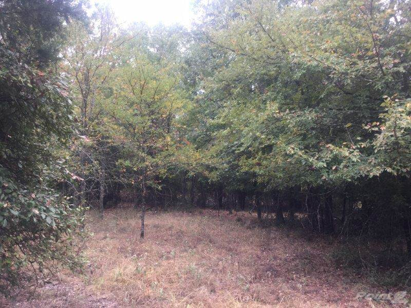 Land for sale in 723 LCR 755, Groesbeck, Texas ,76642