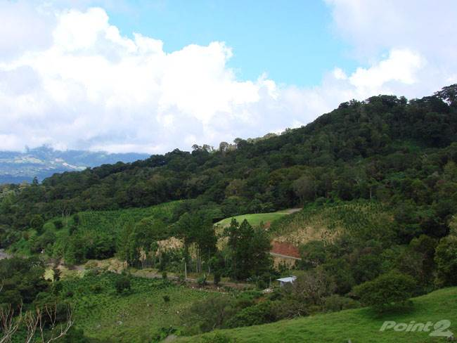Residential For Sale in 22.6 acres in Jaramillo with Coffee, Views, Forest and Streams, Boquete, Chiriquí   , Panama
