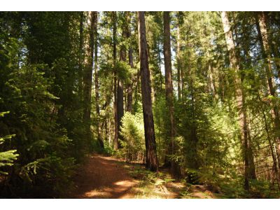 Land for sale in 60461 State Highway 3, Trinity Center, California ,96091