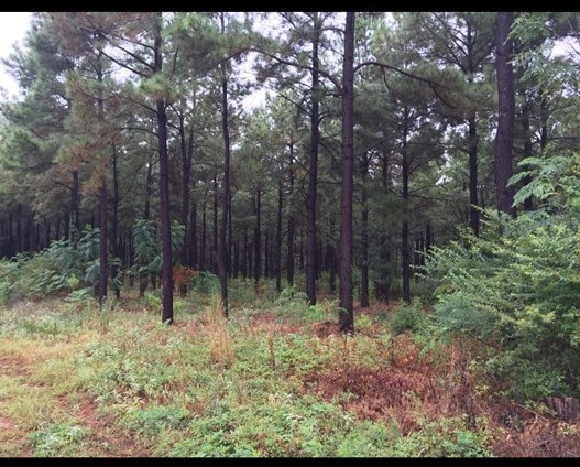 Land for sale in TBD CR 2912, Hughes Springs, Texas ,75656