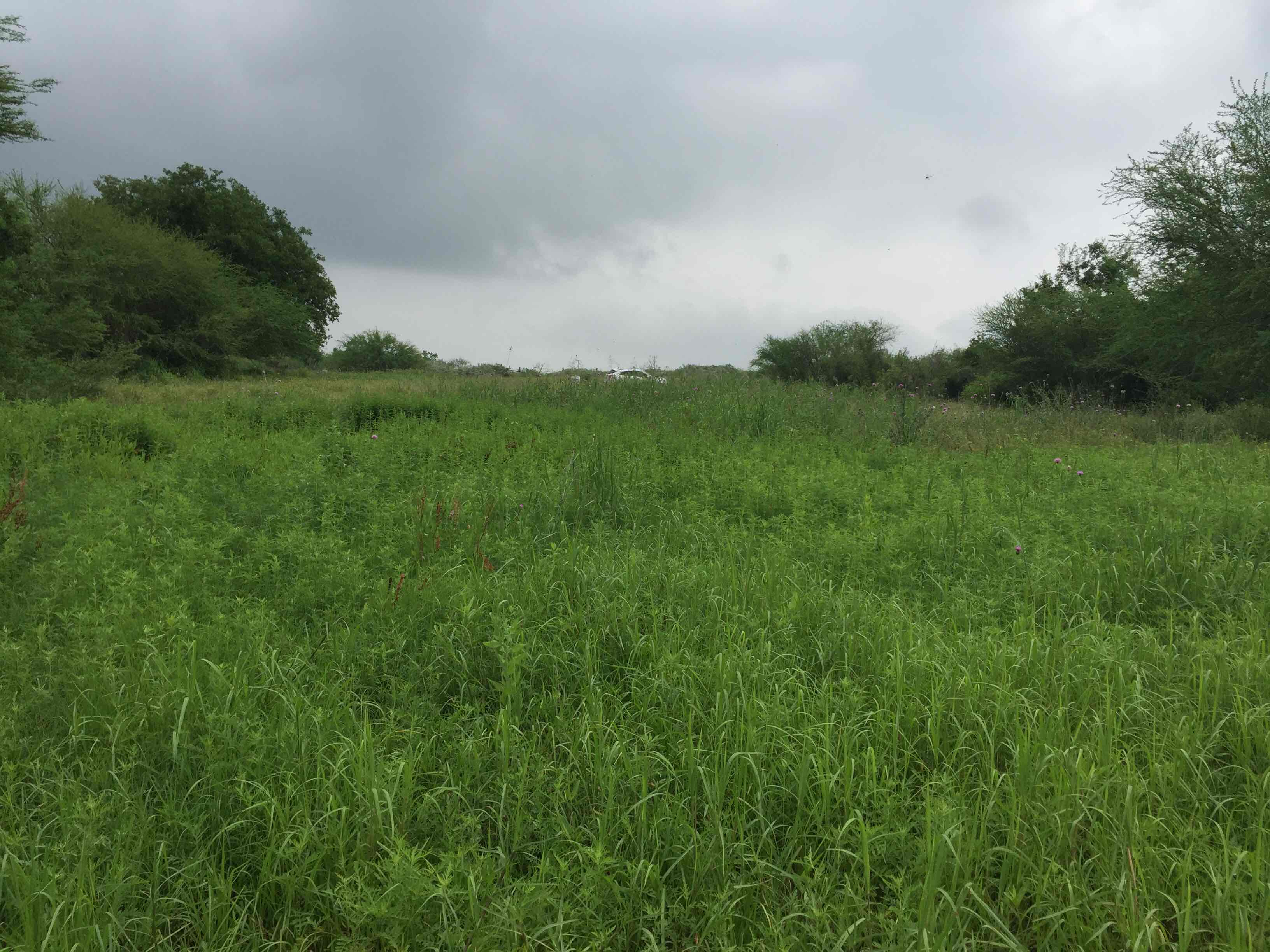 Land for sale in 0 CR 391, Mathis, Texas ,78368