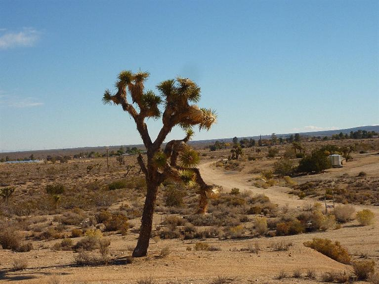 Residential Lots & Land for sale in 0 Ave W-4 Ave, Pearblossom, California ,93553