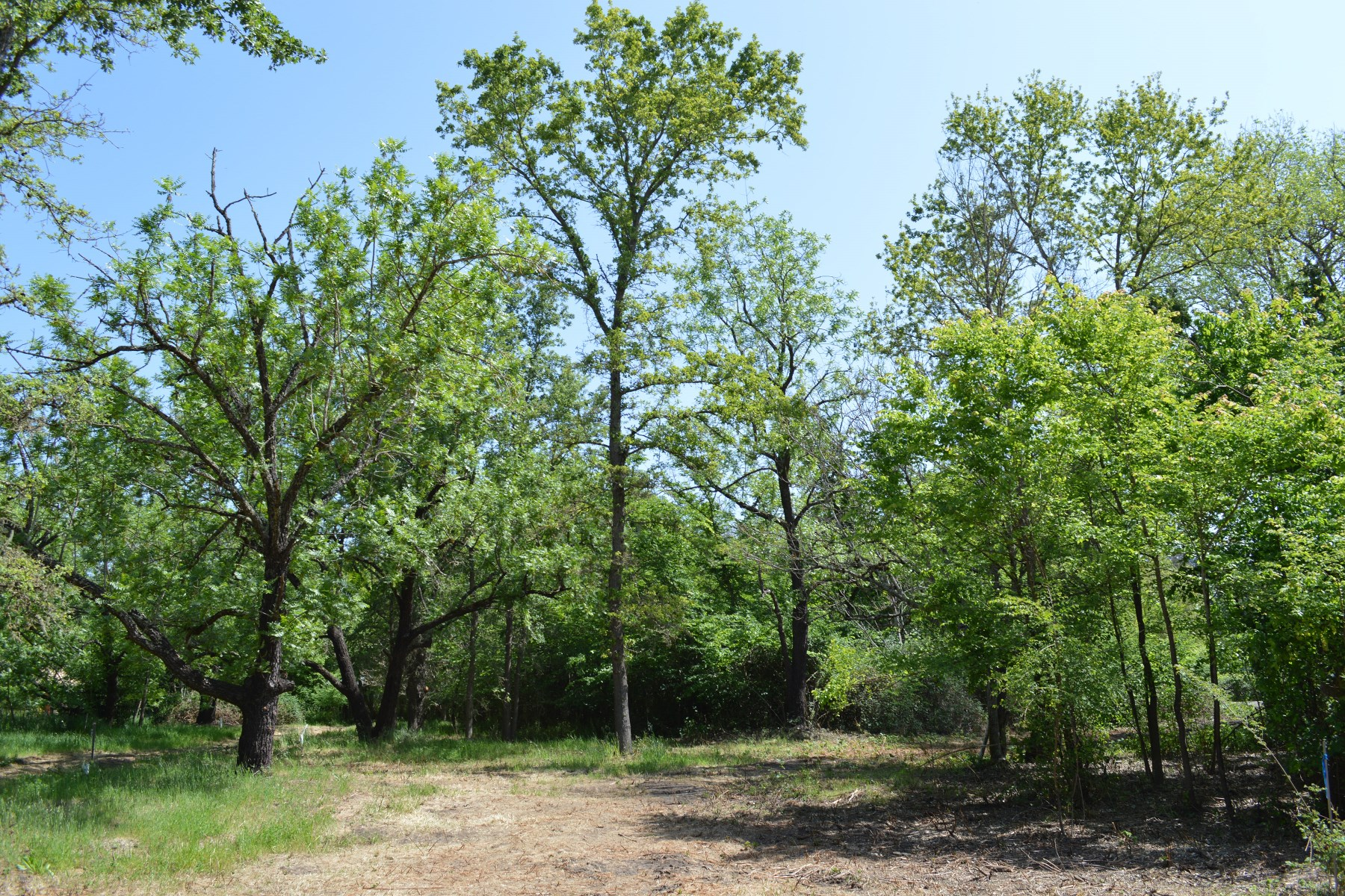 Land for sale in 185 Jessie St, Kenwood, California ,95452