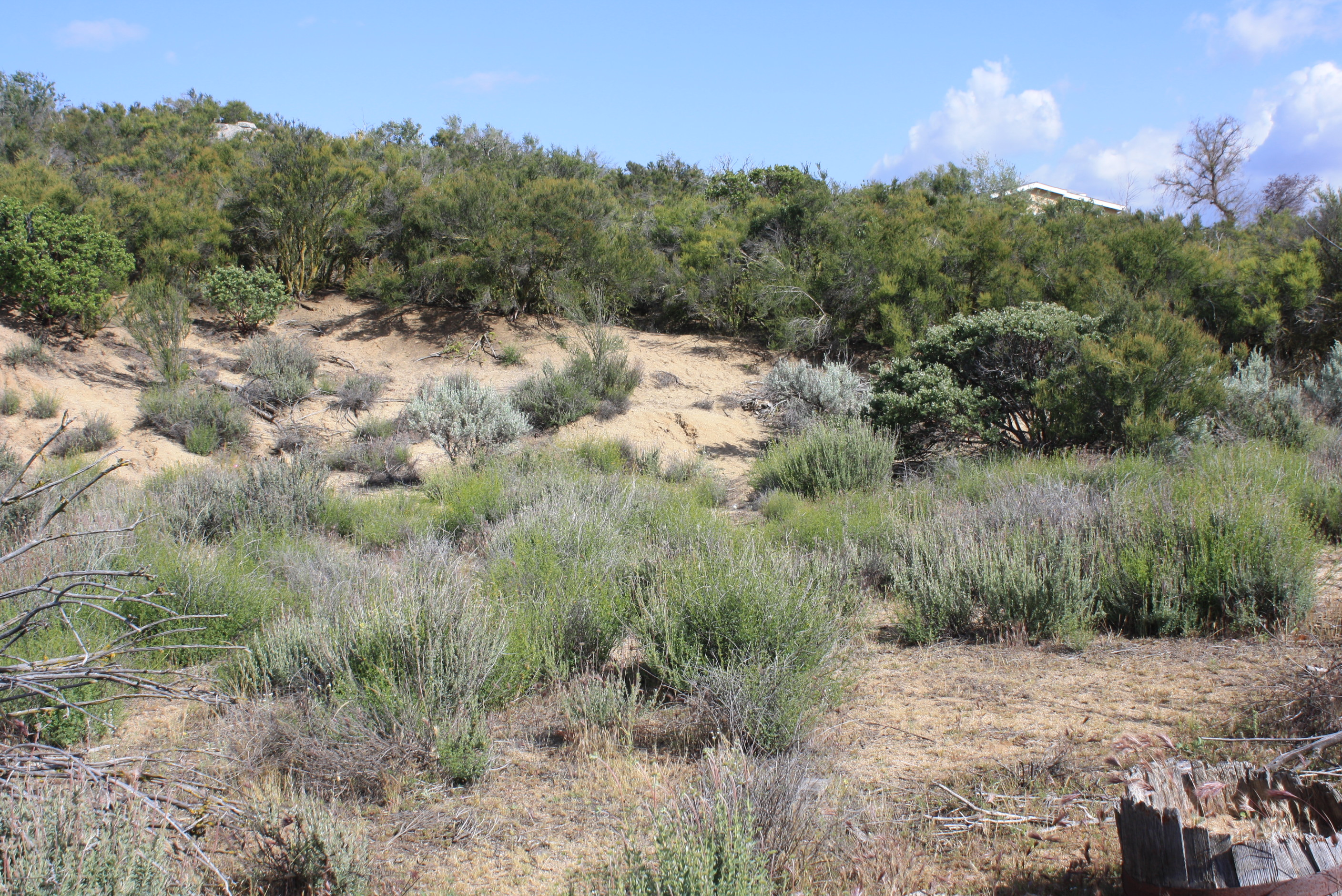 Land for sale in 0 Scouts Lane, Anza, California ,92539
