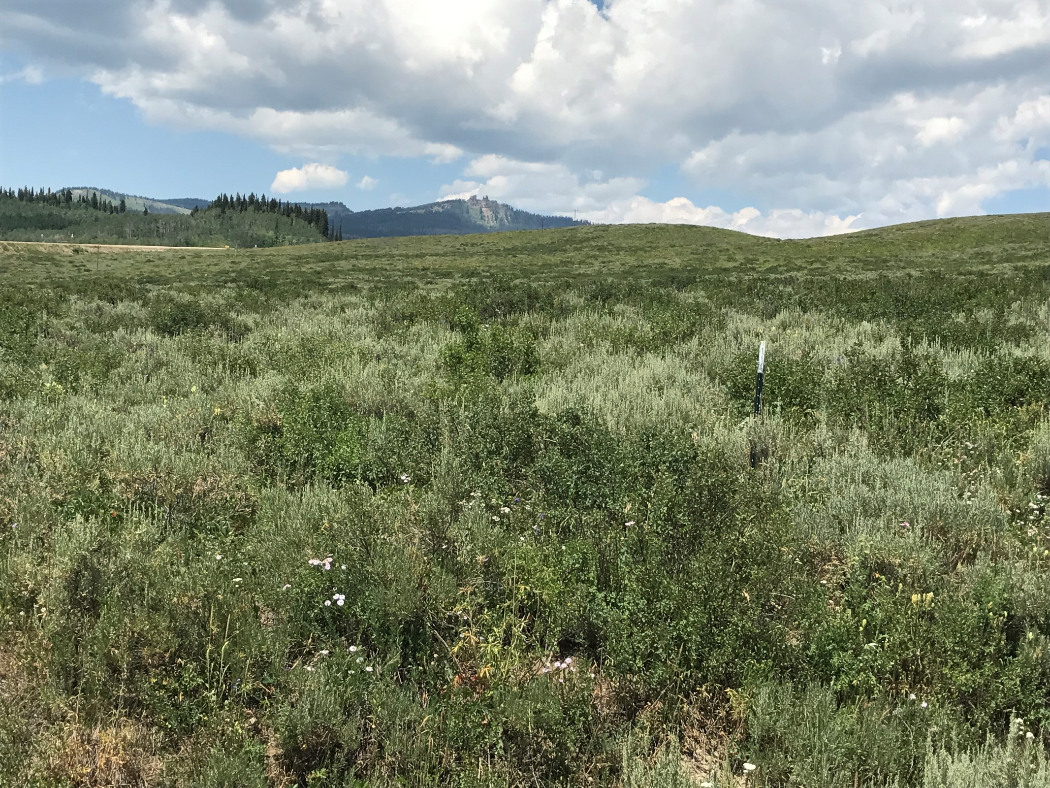 Land for sale in 197 GCR 283, Kremmling, Colorado ,80459