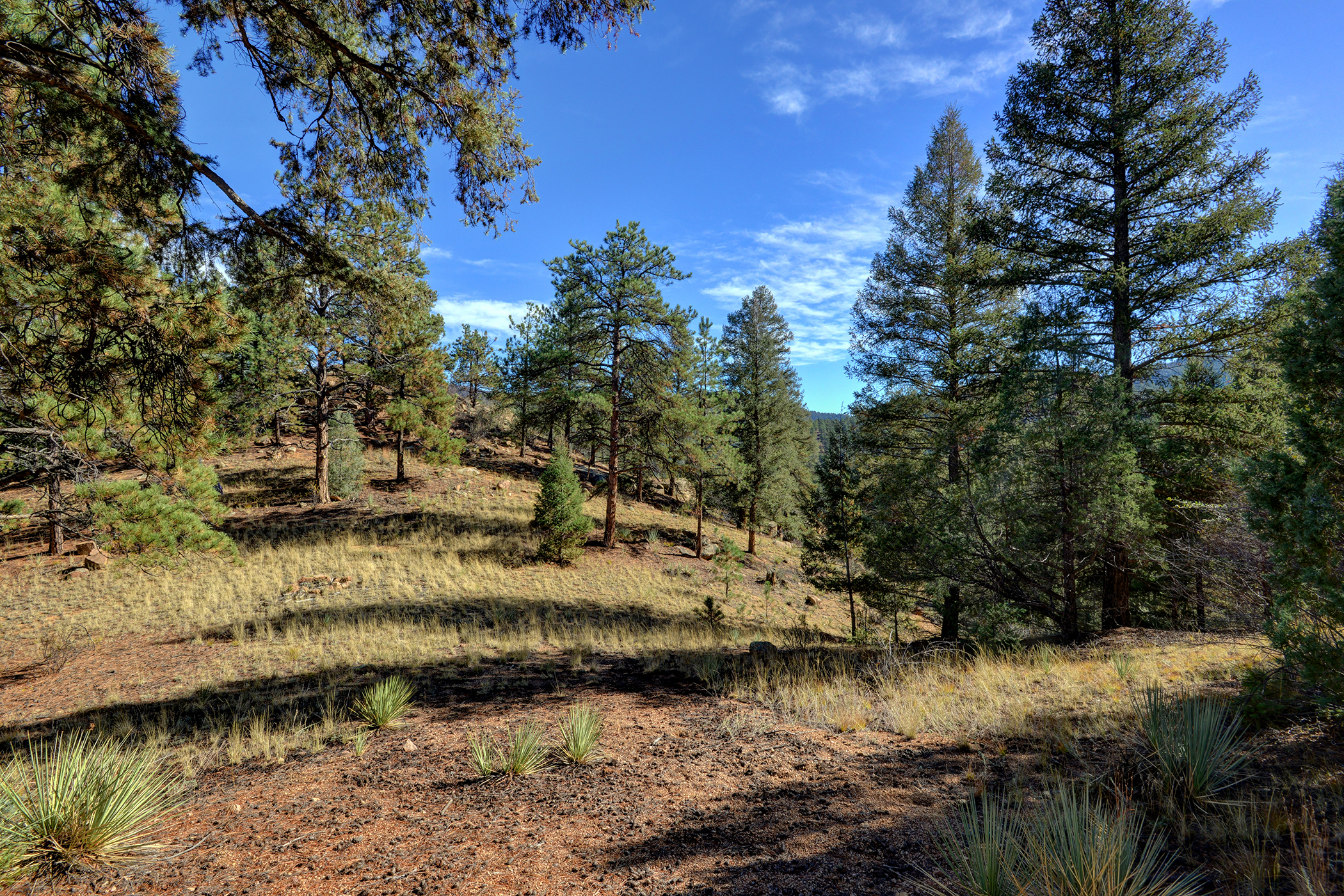 Land for sale in 17038 Blue Heron Drive, Pine, Colorado ,80470