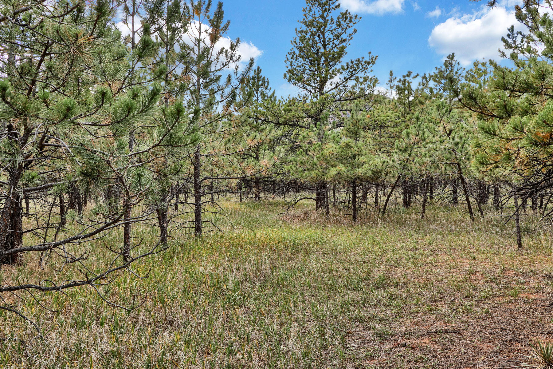 Land for sale in Lot 4 Stone View Rd, Monument, Colorado ,80132