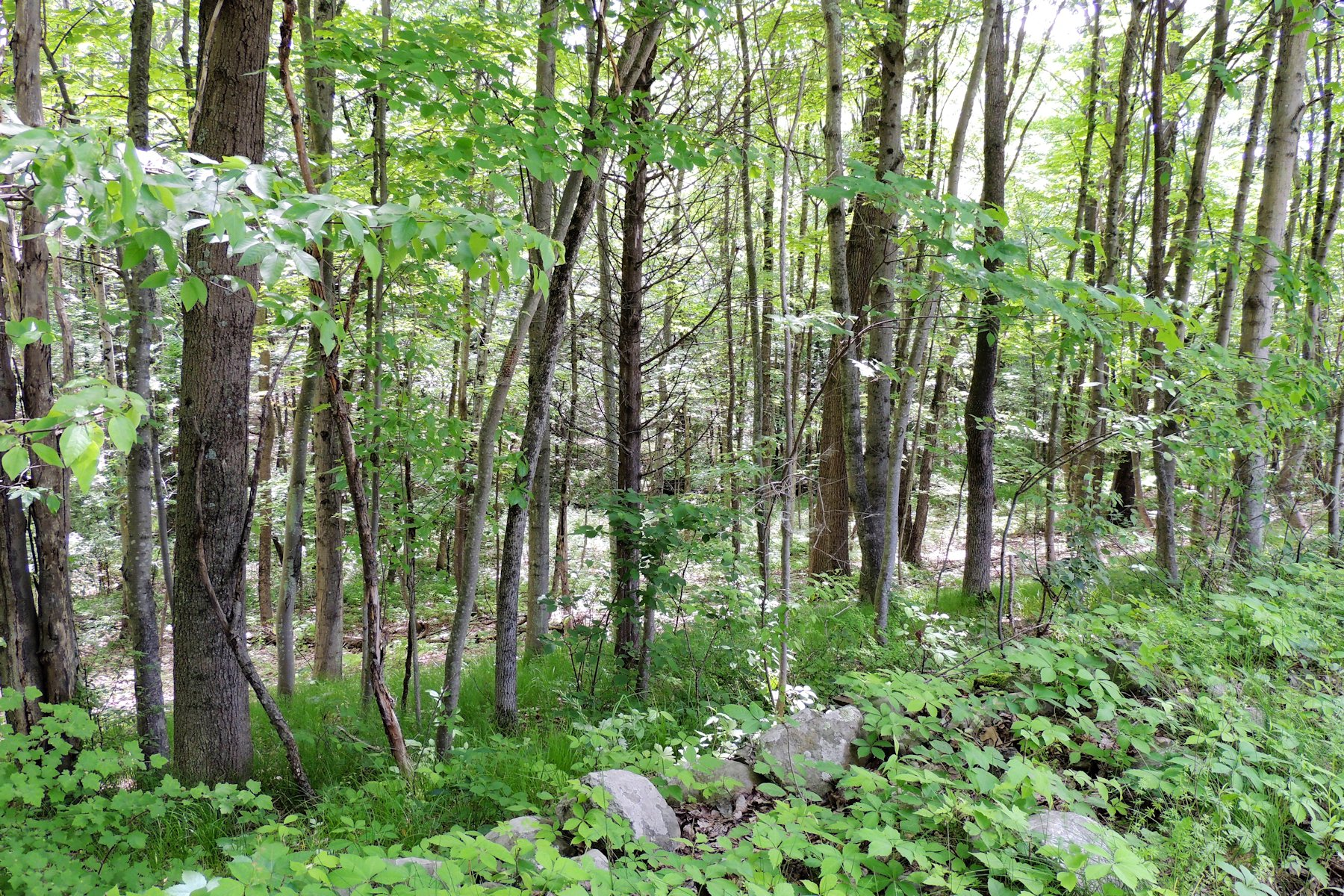 Land for sale in Pitts Road, Chatham, NY ,12136