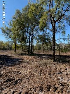 Land for sale in TBD 353 HIGHWAY, Old Town, Florida ,32680
