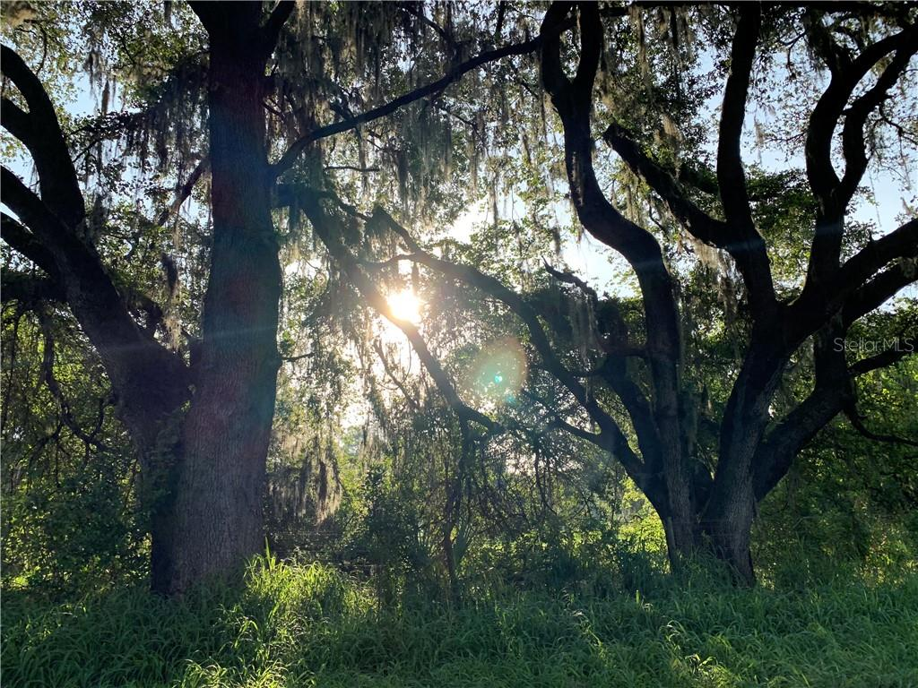 Land for sale in 7100 Williams ROAD, Seffner, Florida ,33584